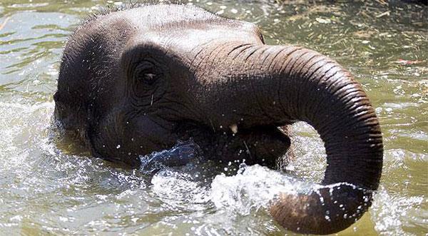 Elephant - Dublin Zoo